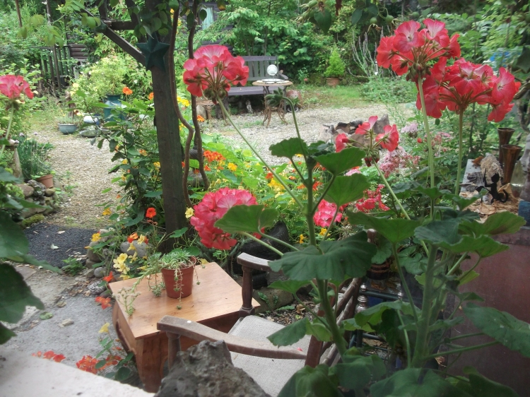 permaculture B&B Ireland 005