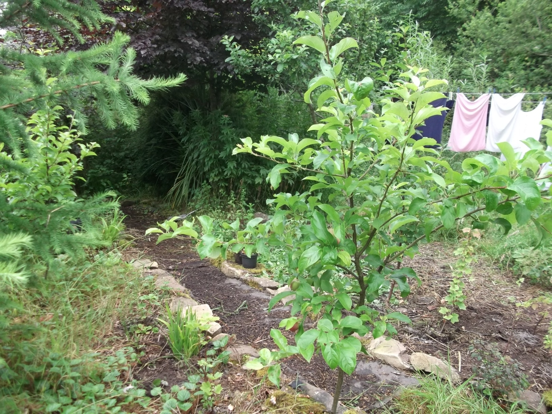 permaculture orchard at bealtainecottage.com 007