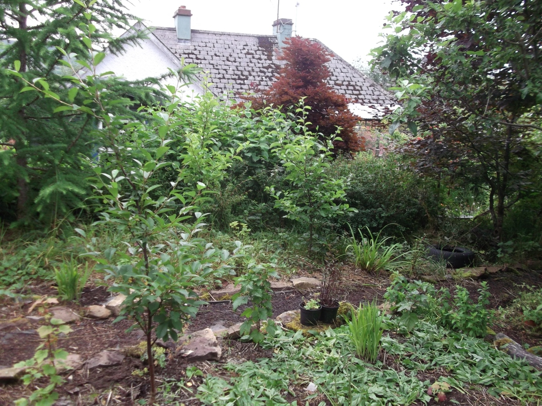 permaculture orchard at bealtainecottage.com 008