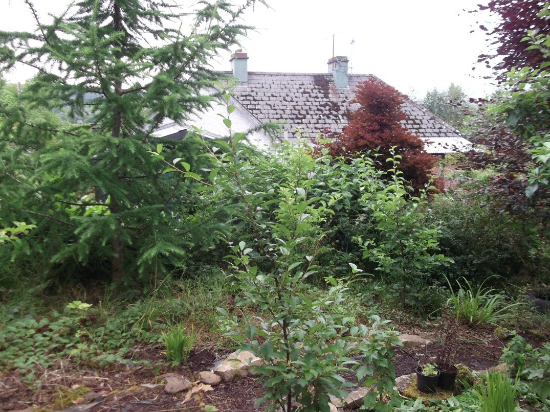 permaculture orchard at bealtainecottage.com 009