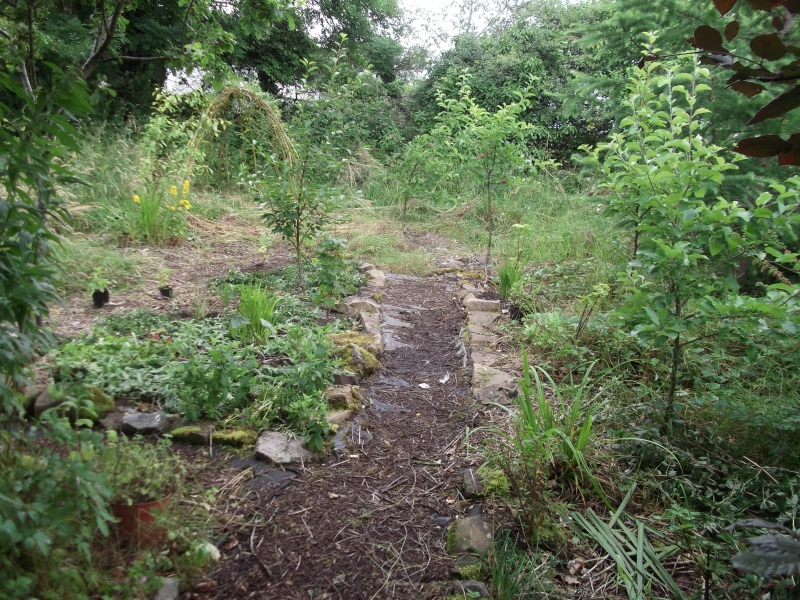 permaculture orchard at bealtainecottage.com 012