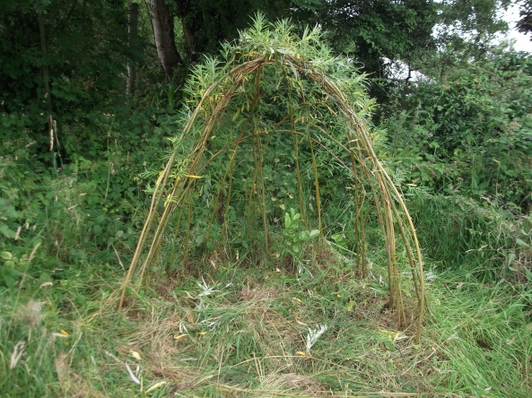 permaculture orchard at bealtainecottage.com 019