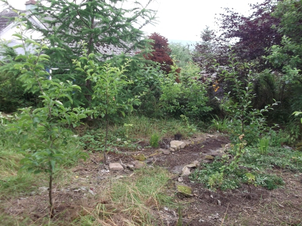 permaculture orchard at bealtainecottage.com 021