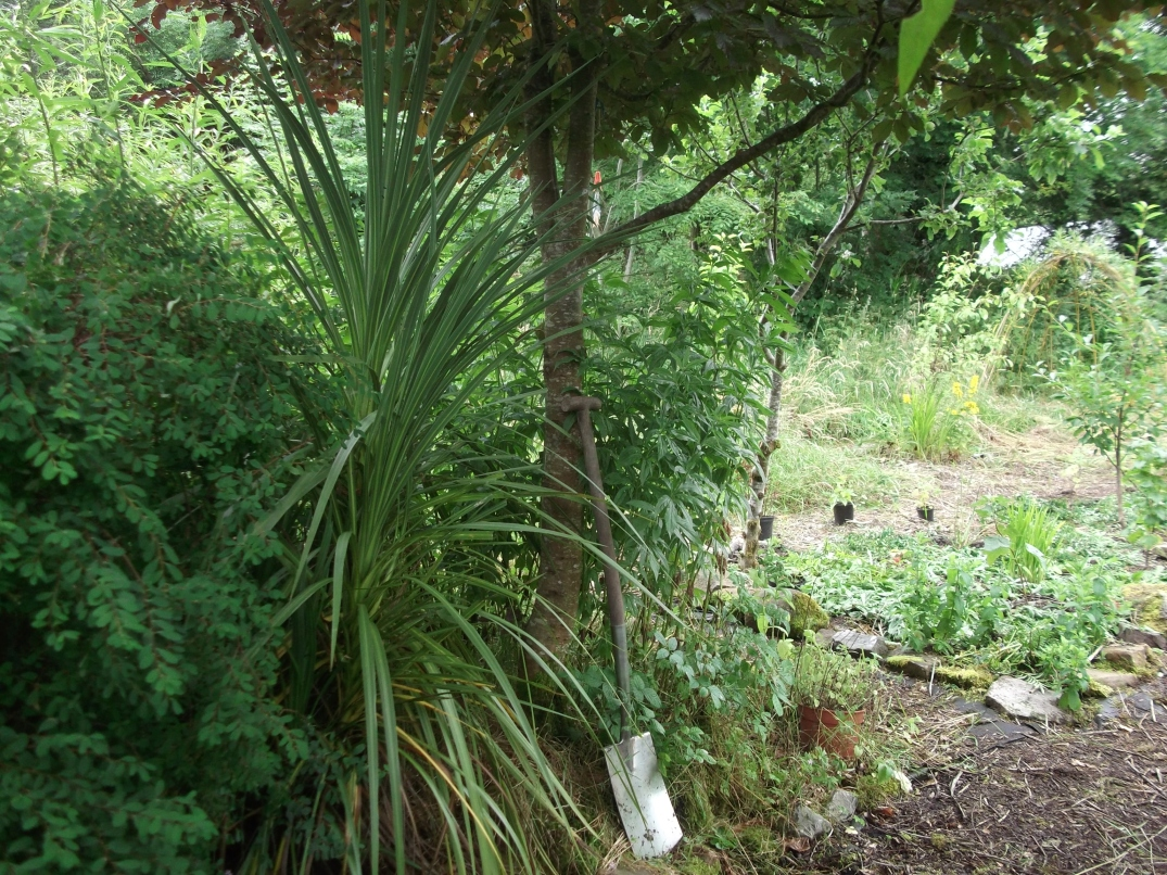 permaculture orchard at bealtainecottage.com 024