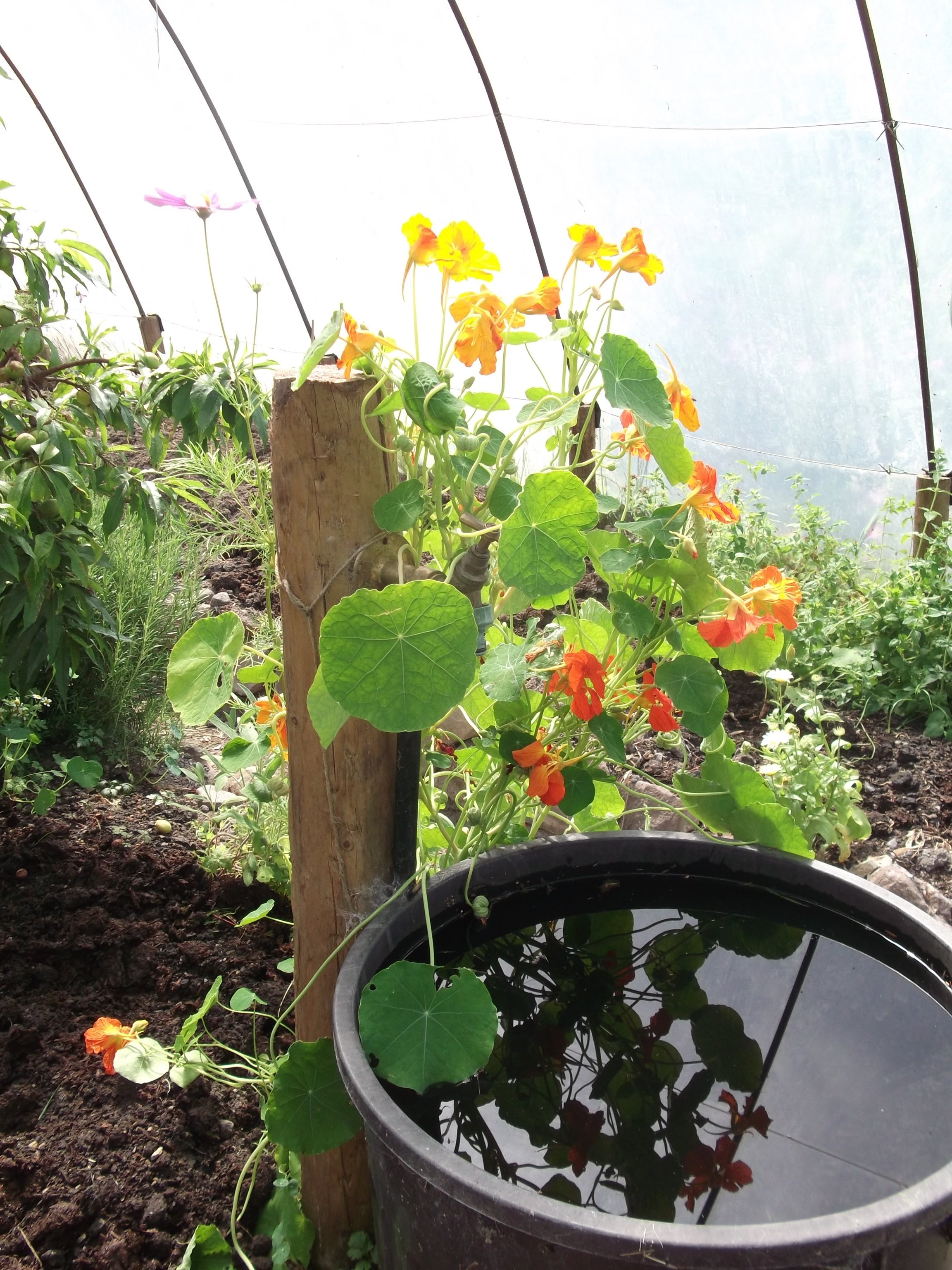 Summer at Bealtaine Cottage 013