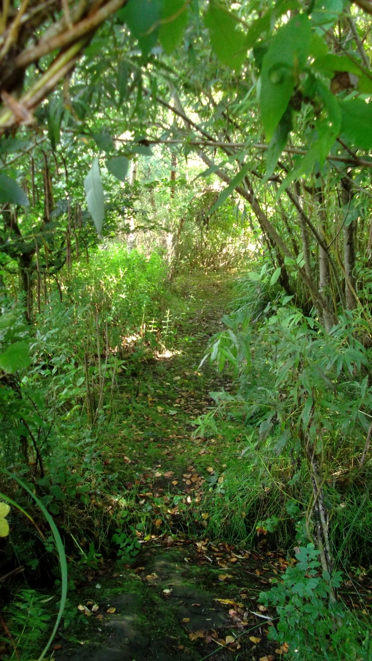 bealtainecottage.com Permaculture 015