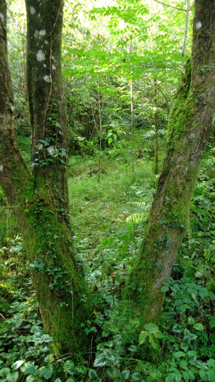 bealtainecottage.com Permaculture 047