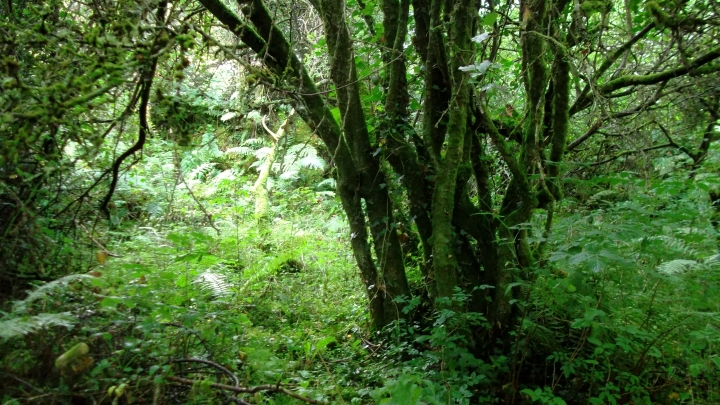 bealtainecottage.com Permaculture 055