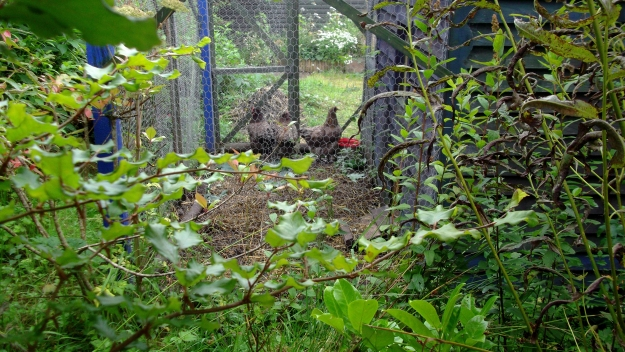 permaculture at bealtainecottage.com 024