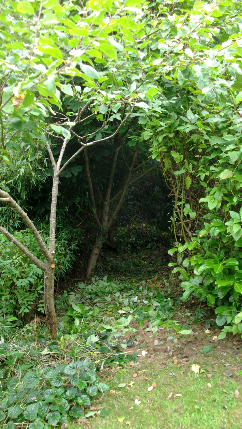 Permaculture Gardens at bealtainecottage.com 001