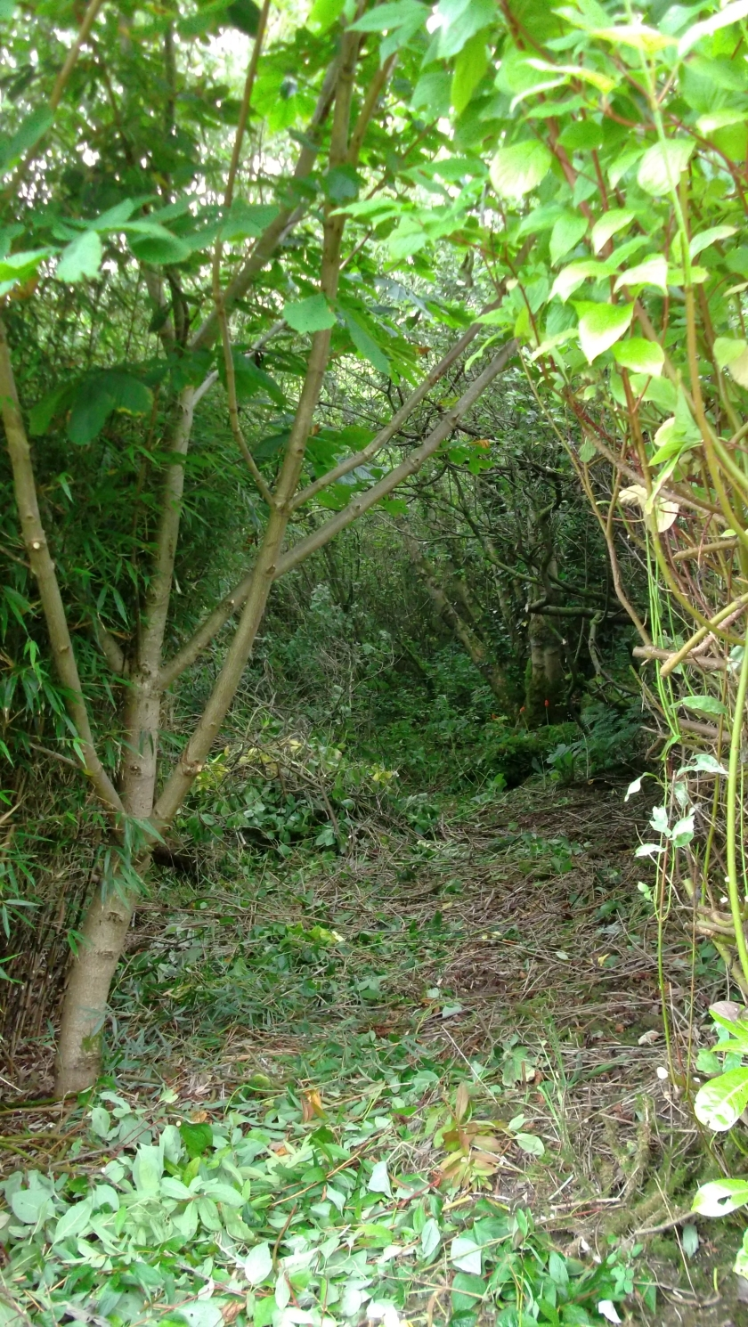 Permaculture Gardens at bealtainecottage.com 002