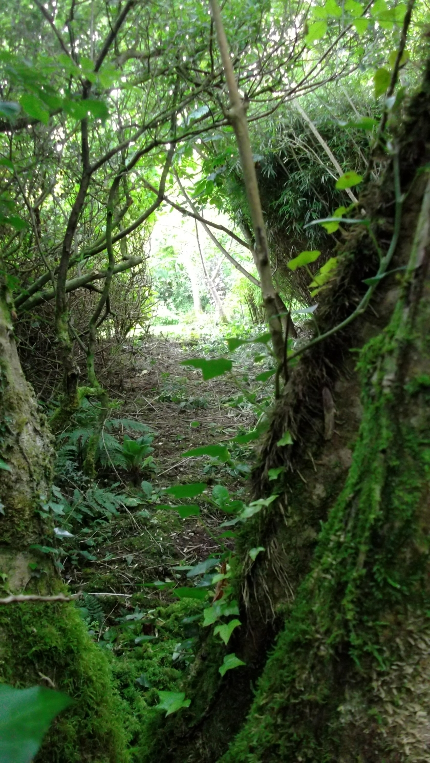 Permaculture Gardens at bealtainecottage.com 029