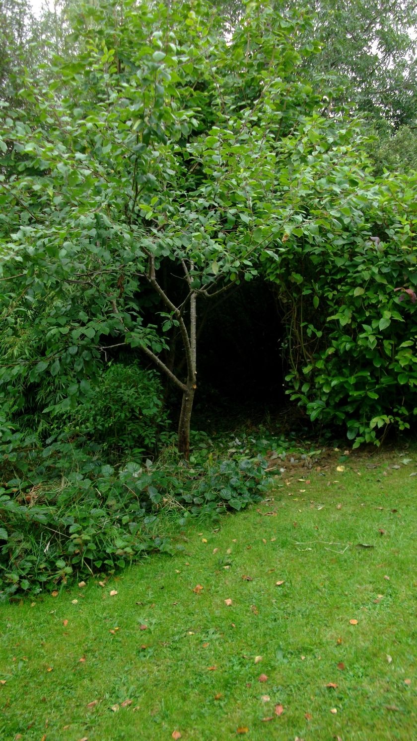 Permaculture Gardens at bealtainecottage.com 043