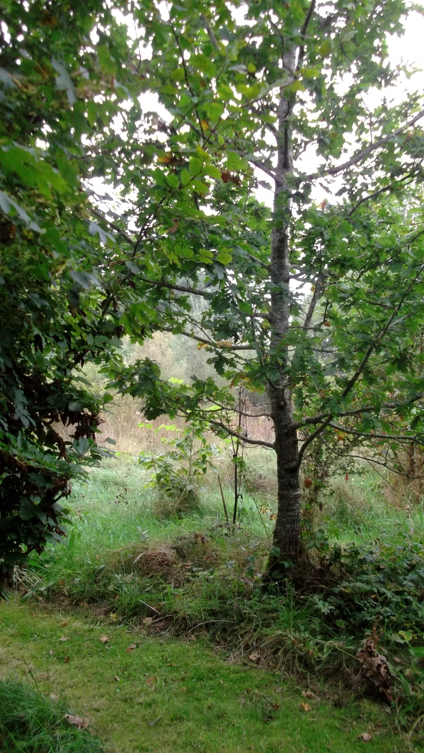 Autumn in permaculture at bealtainecottage.com 020