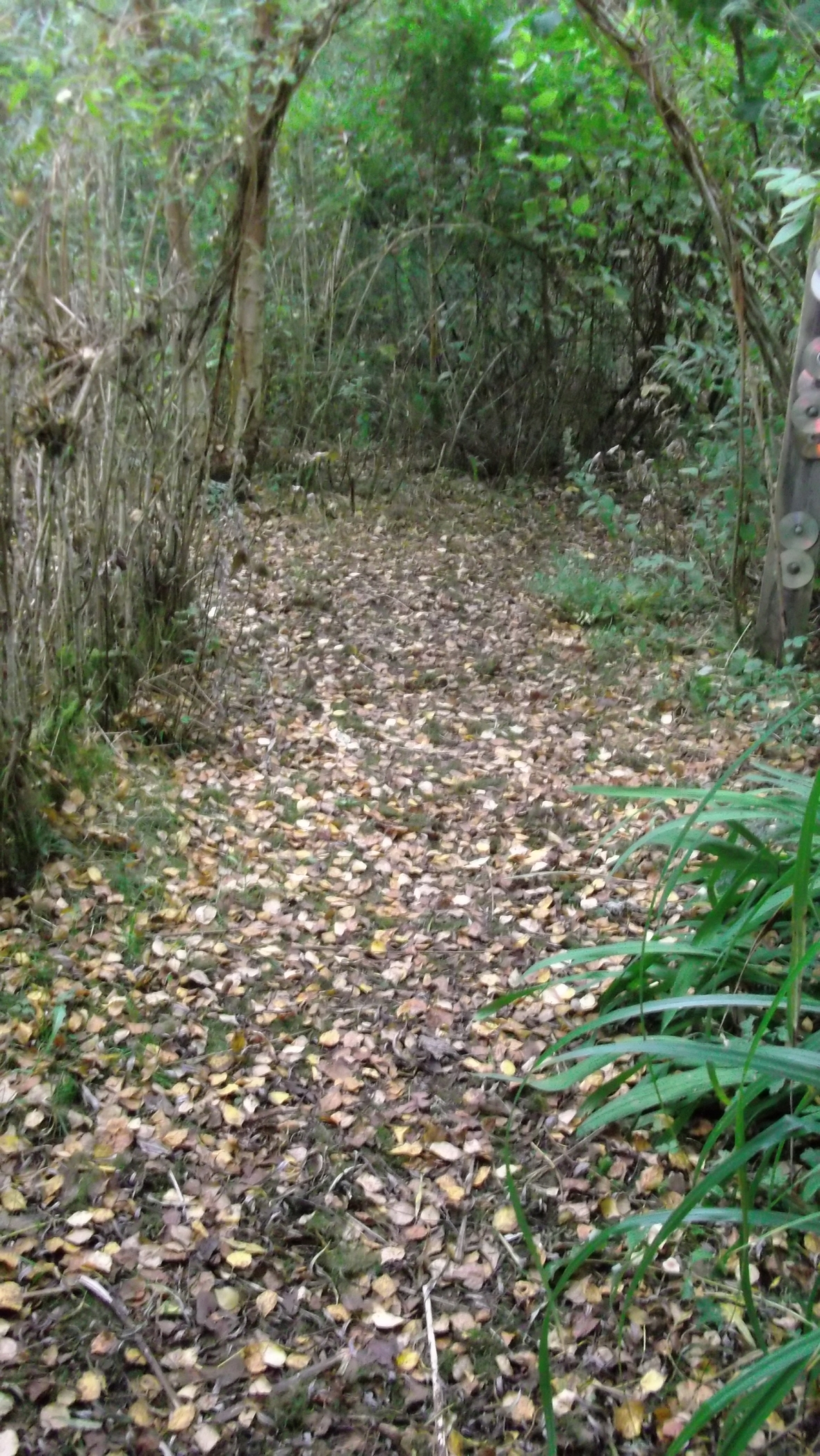 Autumn in permaculture at bealtainecottage.com 021