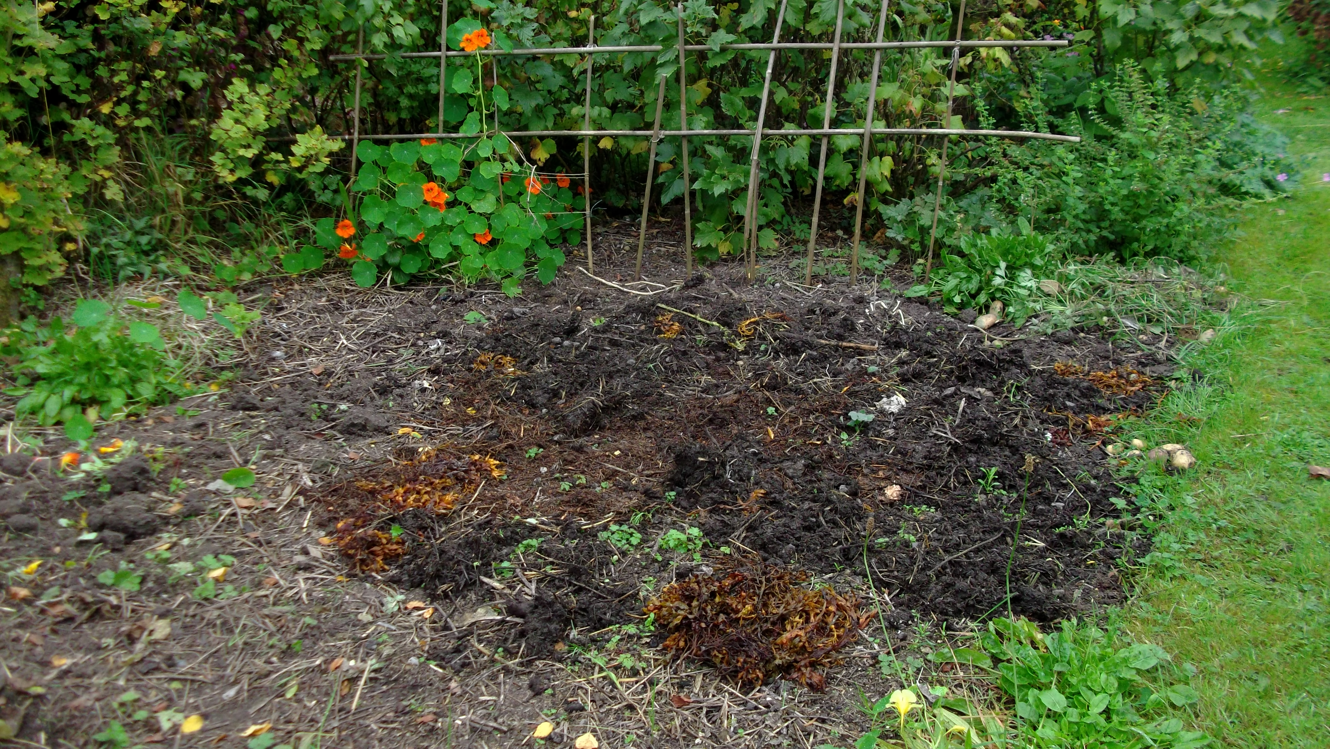 permaculture gardens at bealtainecottage.com 003