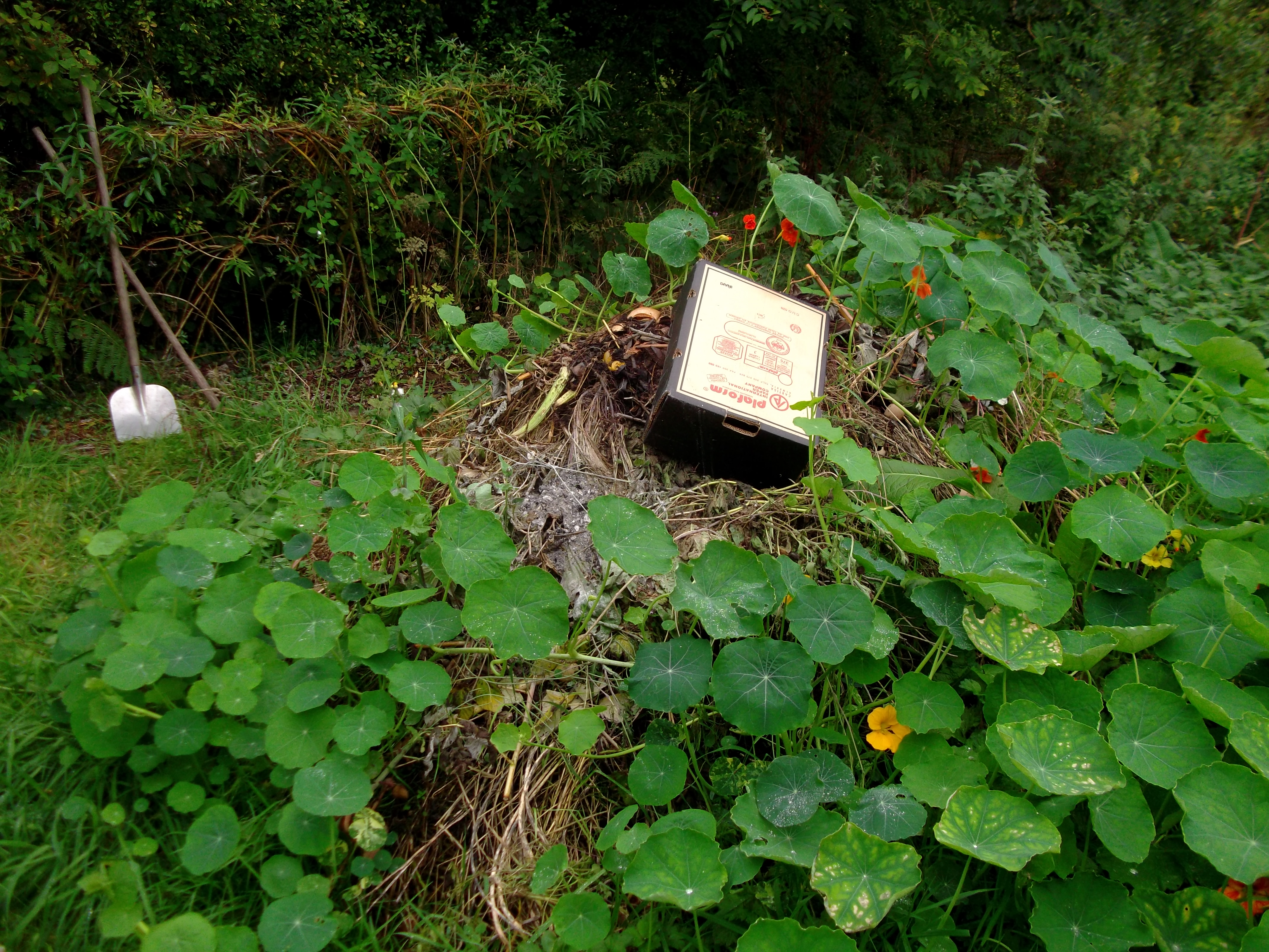 permaculture gardens at bealtainecottage.com 008