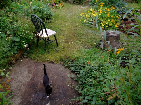 permaculture gardens at bealtainecottage.com 021
