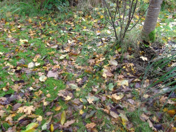 permaculture at bealtainecottage.com 028