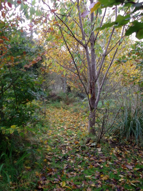 permaculture at bealtainecottage.com 029