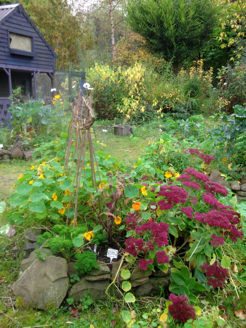 permaculture @ bealtainecottage.com 010