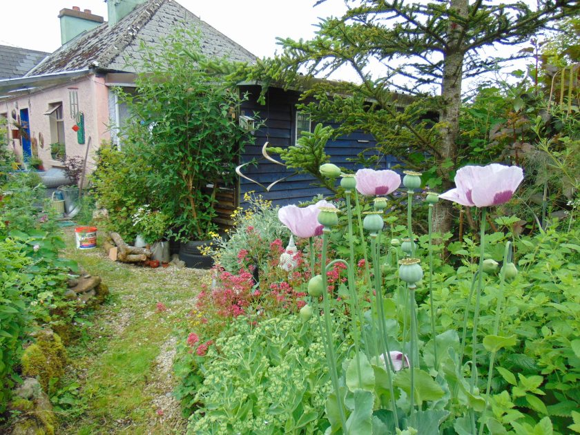 organic gardens at bealtainecottage.com 015