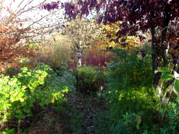 permaculture at bealtainecottage.com 003