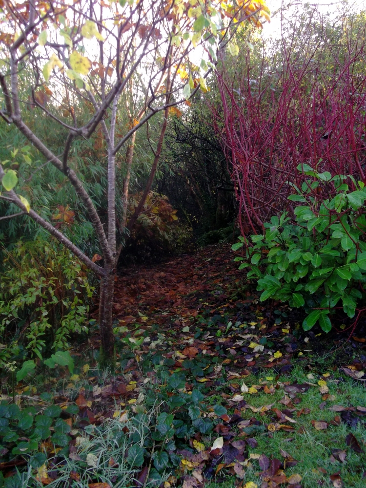 permaculture at bealtainecottage.com 032