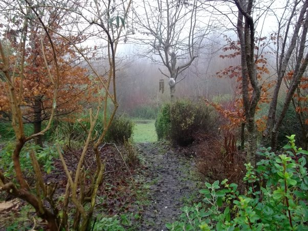 Mist and trees in the permaculture gardens at Bealtaine Cottage