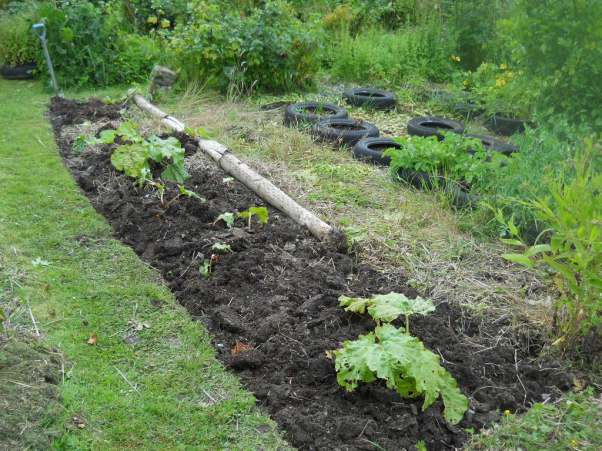 July 2011 permaculture Cottage 004