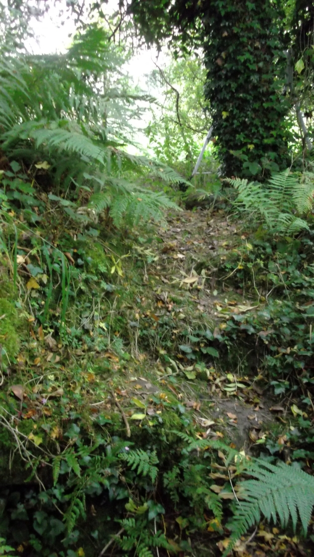 Autumn in permaculture at bealtainecottage.com 010