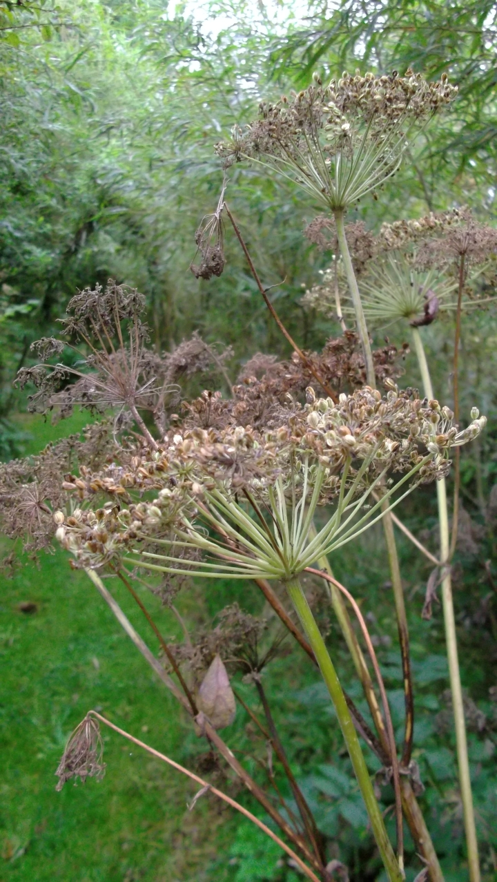 Autumn in permaculture at bealtainecottage.com 014