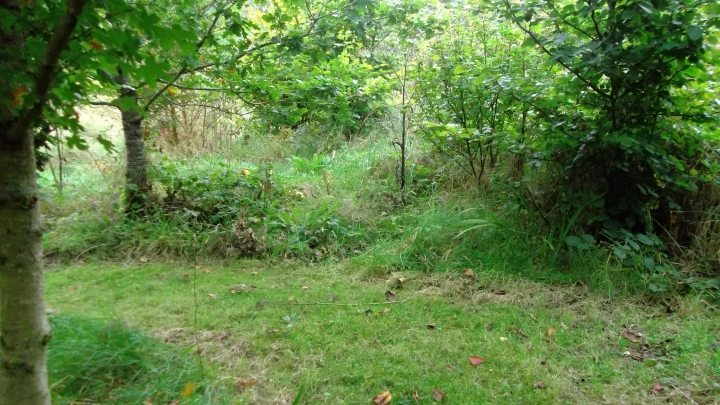Autumn in permaculture at bealtainecottage.com 019