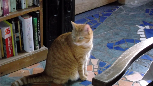 Missy at Bealtaine Cottage