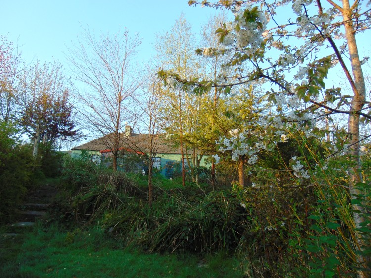 permaculture gardens at bealtainecottage.com 020