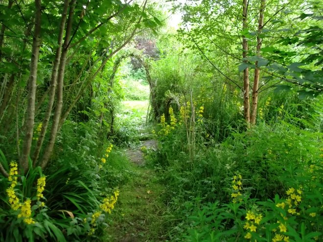 Lysimachia Punctata and willow arch