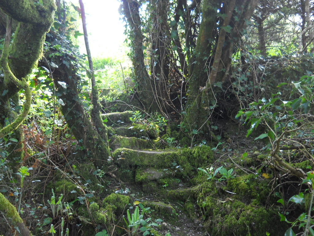 The Fairy Wood at Bealtaine Cottage