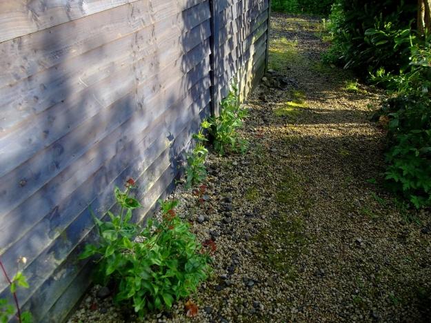 Plant diversity at Bealtaine Cottage