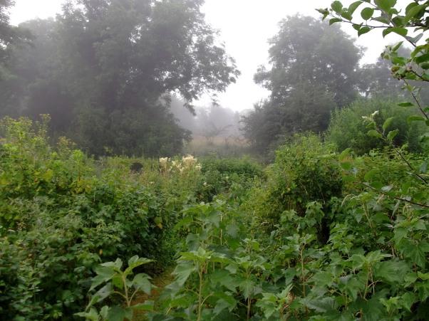 The misty hill of Ballyfermoyle