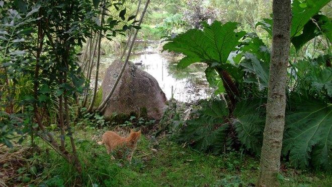 Pond in the Bog Garden at Bealtaine Cottage 015