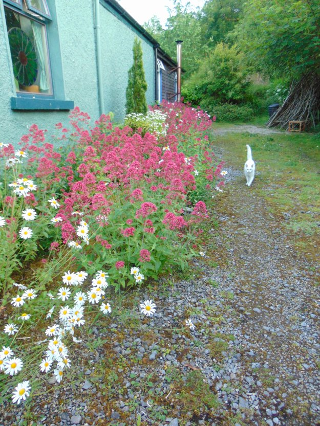 Garden permaculture at bealtainecottage.com 097