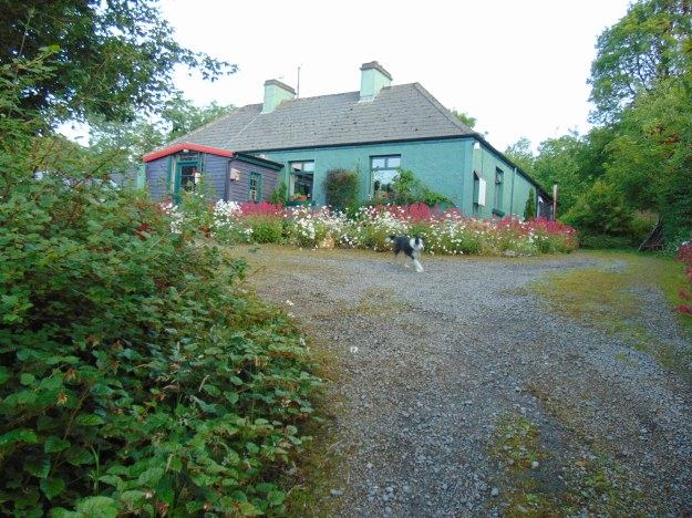 Garden permaculture at bealtainecottage.com 107