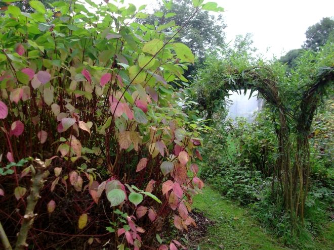 Sustainable growing at bealtainecottage.com 009