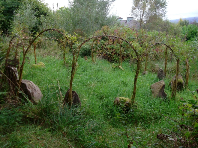 Sustainable growing at bealtainecottage.com 014