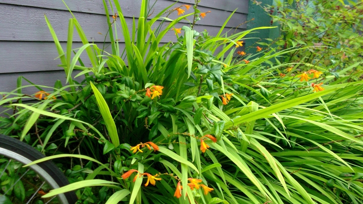 sustainable living at bealtainecottage.com 024