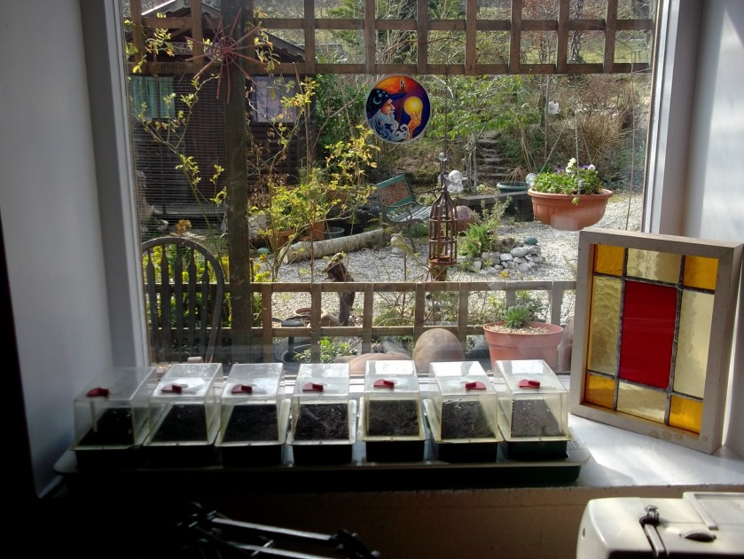 Propagator at Bealtaine Cottage