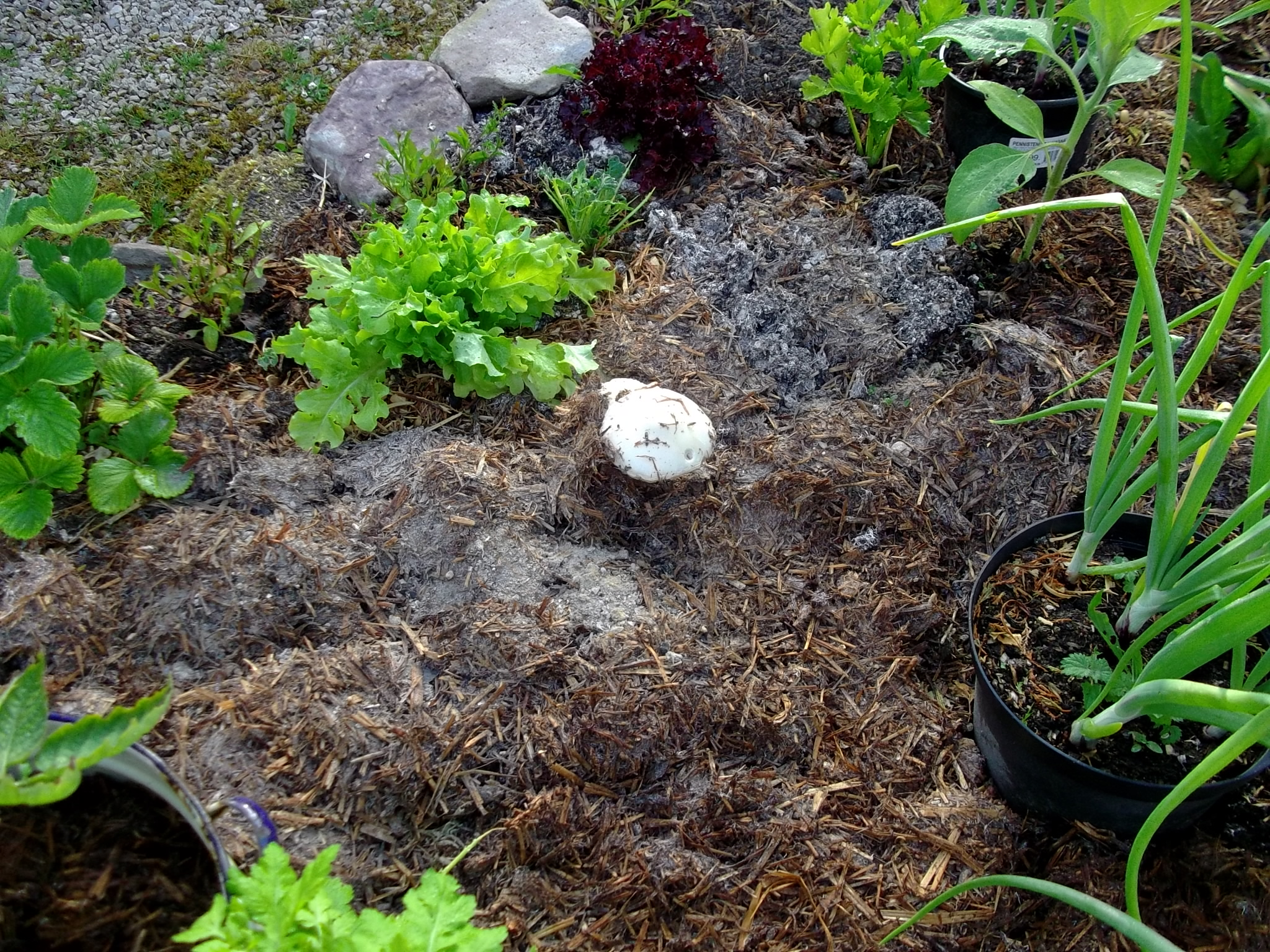 The first stage of collapse is underway bealtaine for Mushroom soil