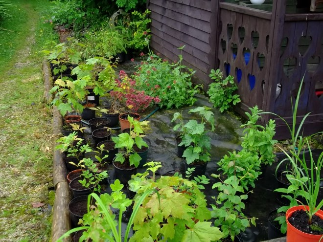 The Nursery at Bealtaine Cottage