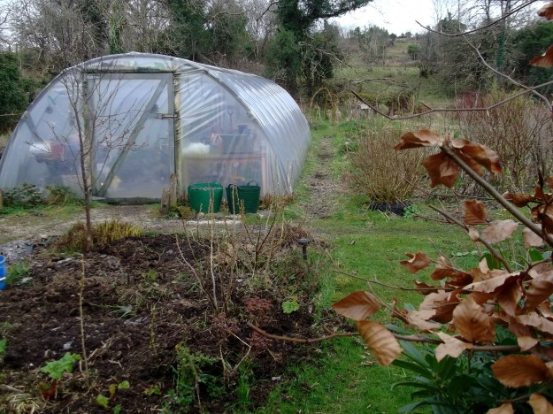 home made polytunnel at Bealtaine Cottage