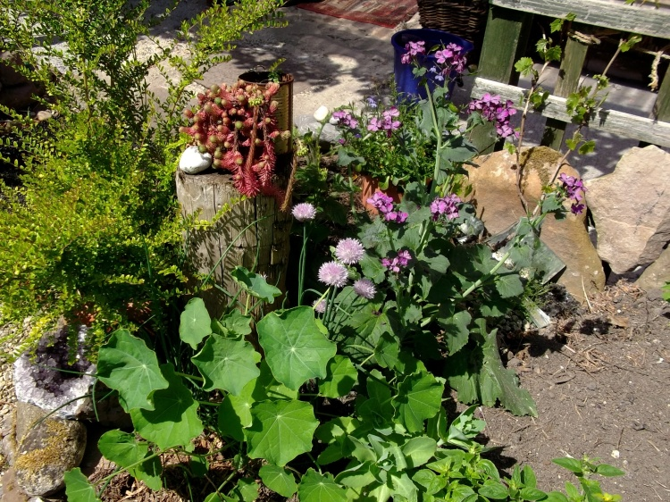 Bealtaine Cottage June 2013